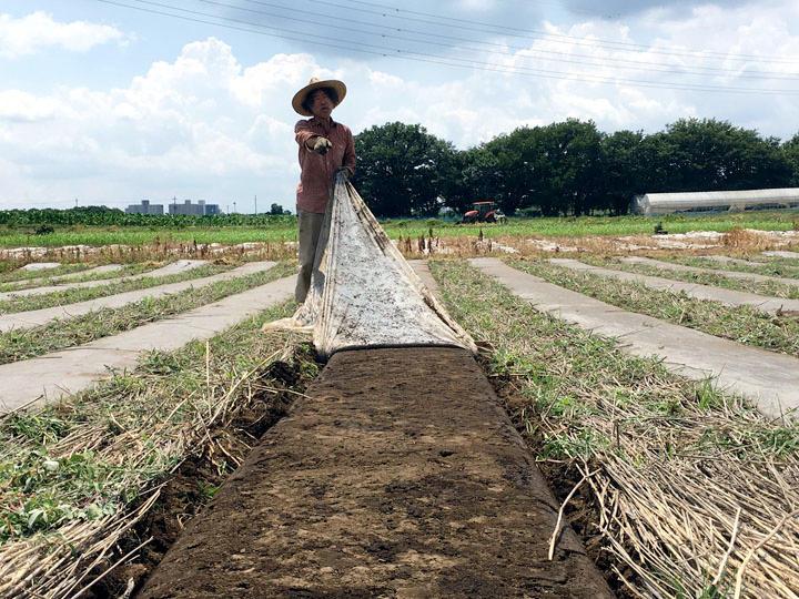 太陽熱土壌消毒で雑草防除! 除草剤なしで幼苗までのニンジンを守れ