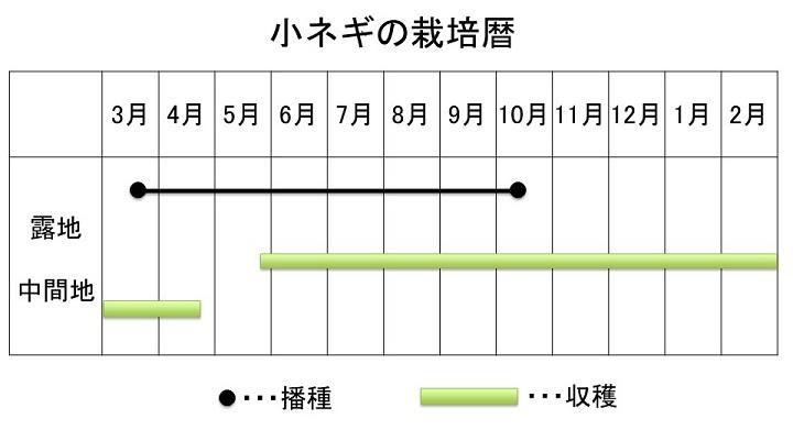 小ネギの栽培暦