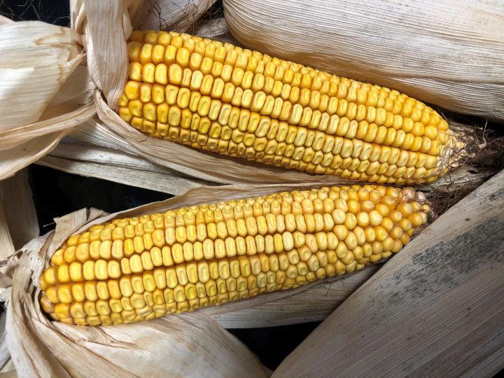 外食の不振で業務用米の概算金が下落、転作で注目を集める新たな作物