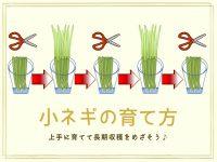 農家が教える小ネギの栽培方法 いつでもとれたて! キッチンガーデンでも育てられる小ネギの作り方