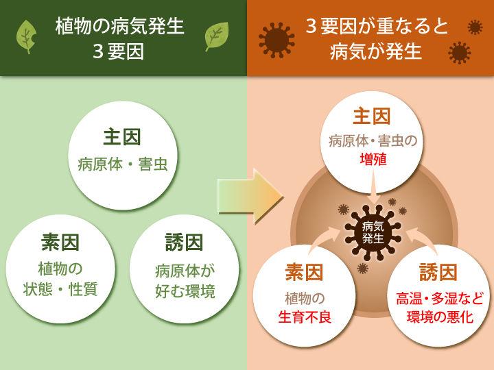 病気発生の3要因