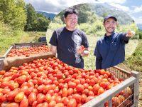 契約栽培で安定収入!生産者から見た魅力とは。日本デルモンテがトマトの契約栽培農家を募集中!