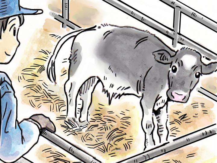酪農漫画「うしだらけの日々」 第27話 子牛の体調チェック