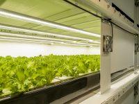 ニーズに応える生産力。売り先に困らない、失敗しない植物工場の秘密に迫る